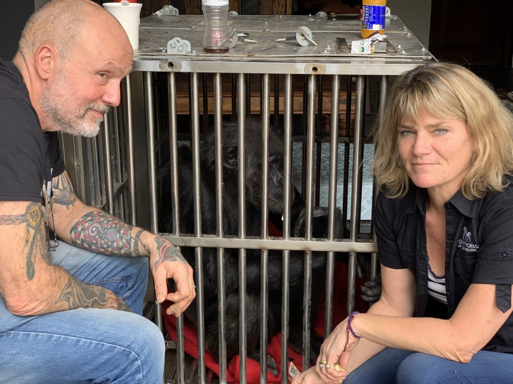 Animal Director, Jeremy Keeling and Park Director, Dr Alison Cronin with rescued chimpanzee Kalu before starting flight back to UK