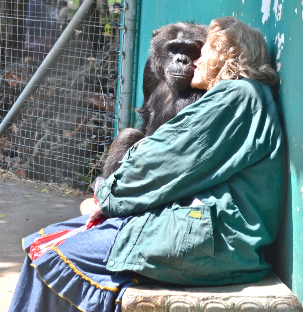 Chimpanzee and Pat Cavendish O'Neill