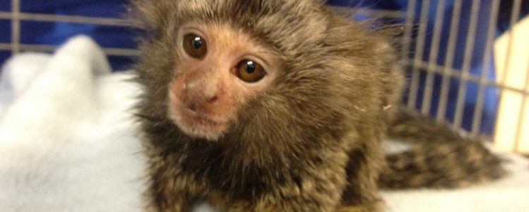 Defra calls for evidence on primates as pets