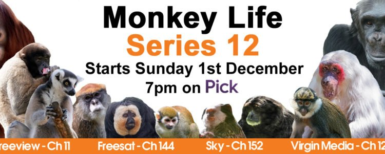 Monkey Life is back!