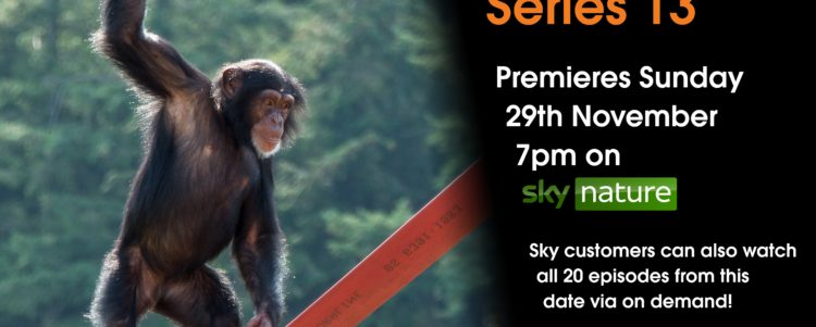 Monkey Life Series 13 has hit our screens!