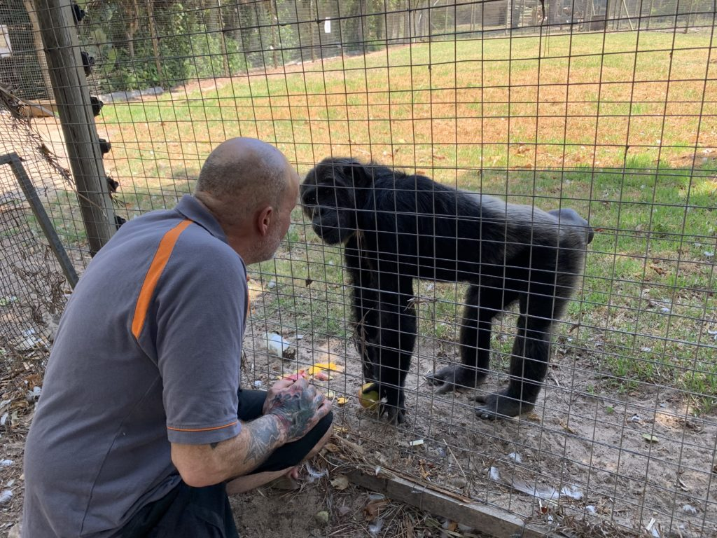Animal Director Jeremy Keeling meets chimpanzee Kalu in South Africa