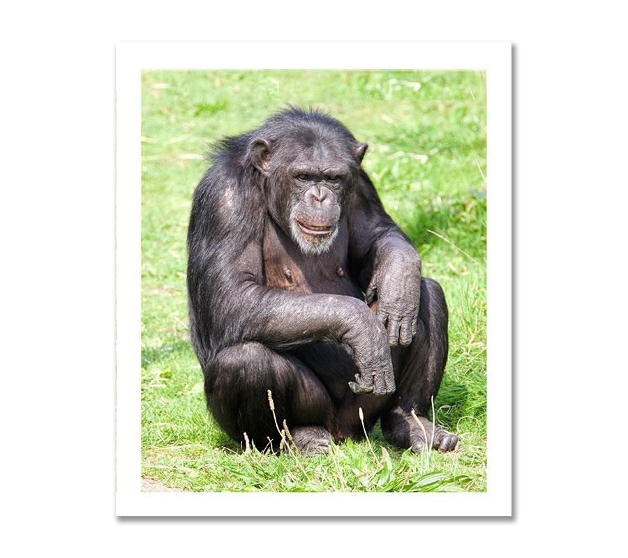 Adopt A Primate - Monkey World