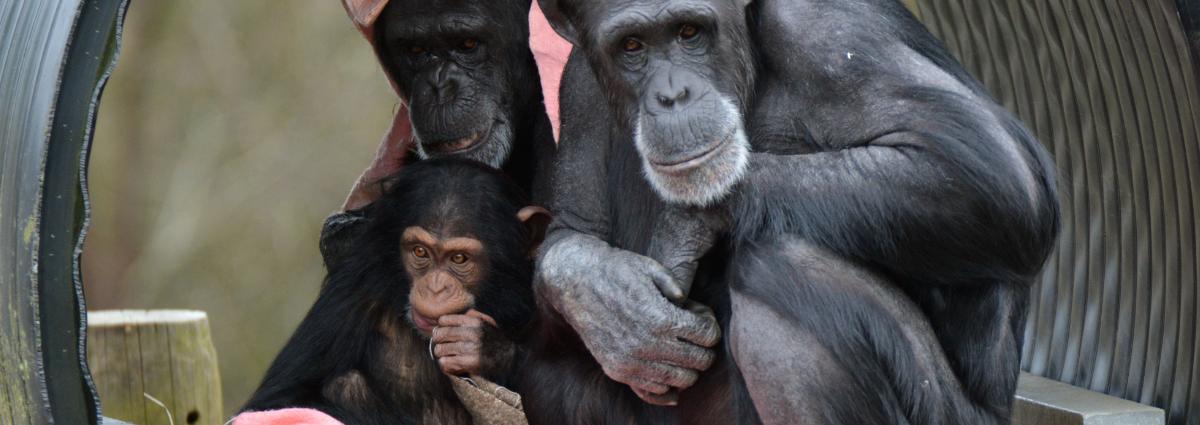 Monkey World Dorset Days Out - Primate Ape Rescue Centre