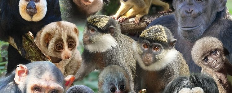 3 Babies Born, 2 Lebanese Guenons and a New Home for Rescued Chimpanzees –  The 12 Primates of Christmas at Monkey World