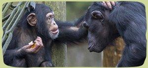 nav-primate-care