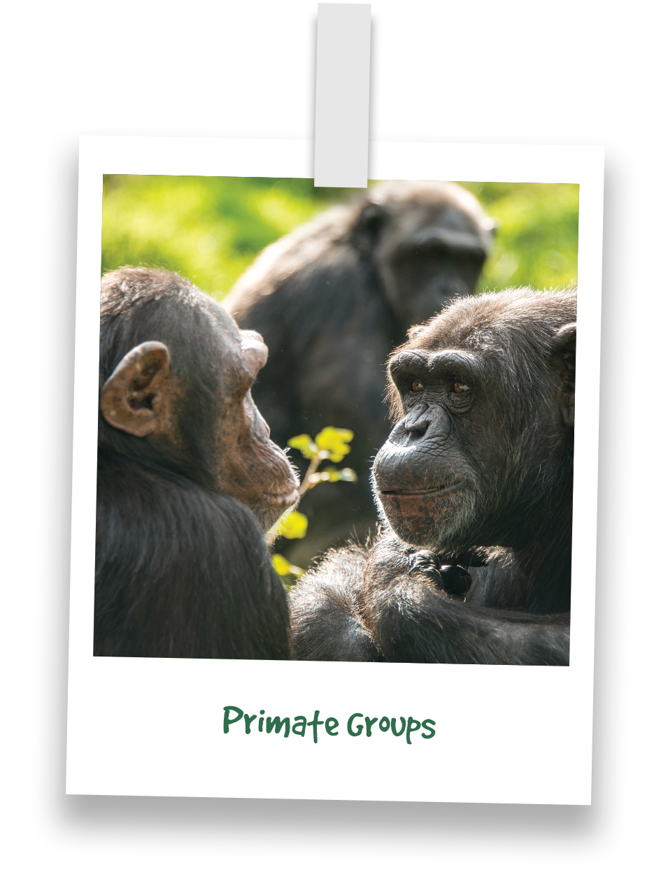 nav-primate-groups