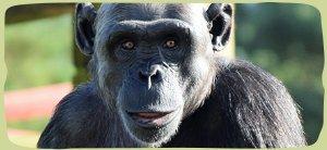 nav-primate-info